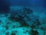 Reef in Cozumel